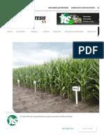 Resultados de Fuentes de Fósforo en Producción de Maíz — Revista AgroSíntesis.pdf