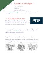 anatomiedunarbre.pdf
