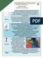 ORGANIZACIÓN DE LOS SECTORES