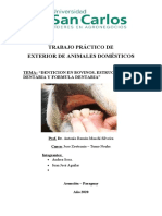 denticion en bovinos