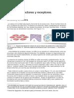 Tema I  Neuronas y redes neuronales pdf _compressed