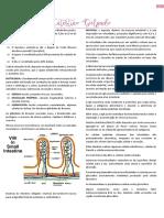 Patologia - Intestino Delgado