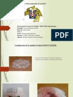 Germinacion del frijol ( EMESTO PRIME).pptx
