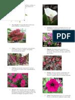 plantas medicinales orn