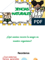 ciencias-naturales-sistema-respiratorio-y-circulatorio5° A