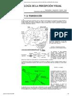 El sistema nervioso y la transducción _ PSICOLOGÍA DE LA PERCEPCIÓN VISUAL