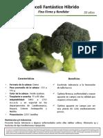 Brócoli-Hib.Fantastico-Ficha-técnica-y-Fotos-en-campo