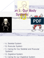 Our body system