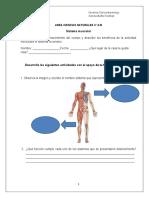 Sistema muscular guía.doc