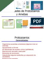 Amebas. histolitica