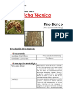 Pinus ayacahuite Ehrenberg 002
