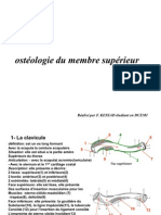 ostéologie du membre supérieur