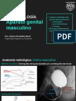 SESIÓN 09 - Aparato genital masculino.pdf