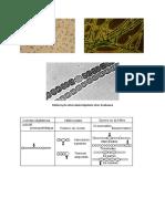 planches cyanobactéries.pdf