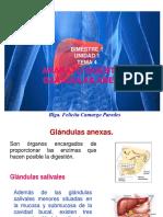 4 ANATO GLAND ANEXAS A.D. ORIGINAL.pdf