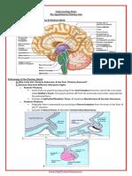 A&P - 2. The Hypothalamo-Pituitary Axis (9p).pdf