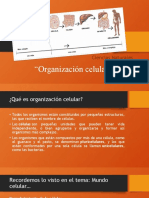 Organización celular 7º y 8º año básico