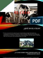 Exposicion- EL CELO.pptx