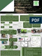 POSTER PRIMATES .pdf