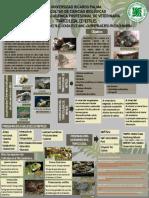 TRÁFICO ILEGAL DE REPTILES.pdf