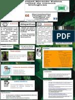 INFOGRAFIA PRIMATES (1).pdf