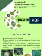 134135176-brassicaceae-ppt.ppt