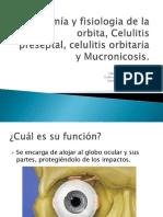 anatomia celulitis