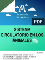 sistema circulatorio de los animales
