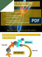 tema_11_mitosis_y_meiosis.pdf