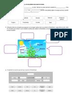 Retroalimentación fotosintesis