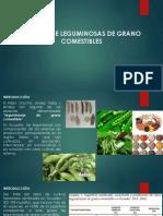 clase 18-6-2020.pdf