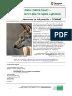 2017lobo.pdf