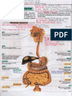 Aparatul digestiv - Anatomie, fiziologie, patologie, tratament, nutriție, suplimente