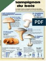 Infographie Carrefour - Le Champignon Sort Du Bois