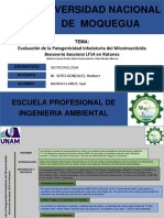 Evaluación de la Patogenicidad Inhalatoria del Micoinsecticida.pdf