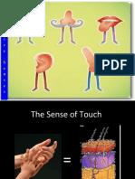 The senses.ppt