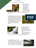 SELVA PERUANA informe de recursos.docx
