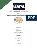 Anatomia y Fisiolofia del sistema nervioso 7