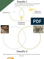 Desafios comparación entre etapas y ciclo de vida animal favorito