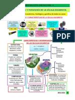 TEMA 1 LA CELULA EUCARIOTA.pdf