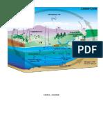 Informe simulacion; Ciclo del Carbono