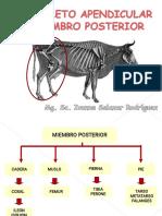 Esqueleto apendicular PA