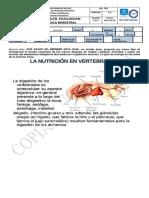 3_BILOGIA_SEXTO_GUIA4_NUTRICIÓN_PLANTAS (1)