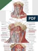 pratica de anato pr2 m2.pdf