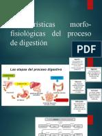 PPT Características morfo-fisiológicas del proceso de digestión