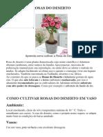 ROSAS DO DESERTO ebook