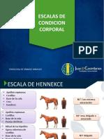 ESCALA DE CC