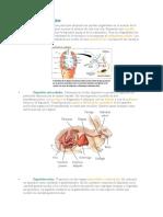 Tipos de digestión.docx