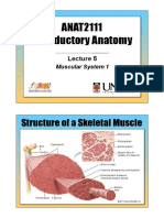 ANAT2111 - Lecture 5 - Muscular System 1.pdf