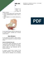 Anatomía de piso pelvico